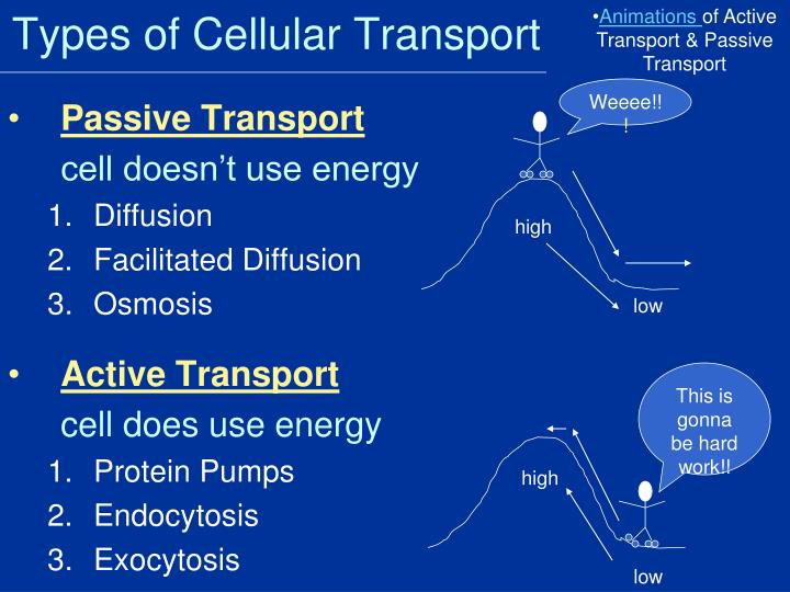 PPT - Cellular Transport Notes Passive Transport  Active Transport