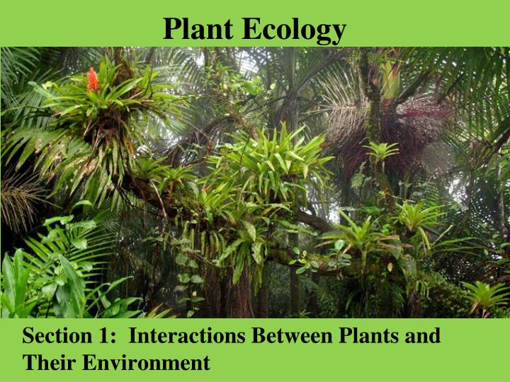 PPT - Plant Ecology PowerPoint Presentation - ID3645836