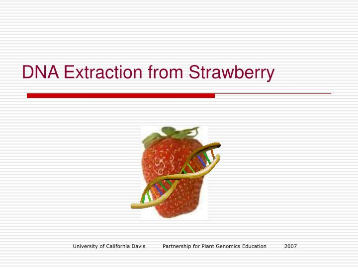 PPT - DNA Extraction from Strawberry PowerPoint Presentation - ID