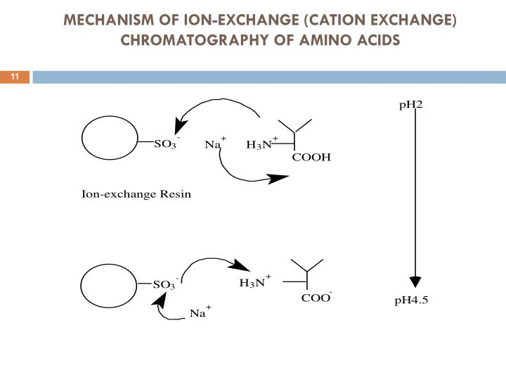 Cation Exchange Chromatography madebyrichard - cation exchange chromatography