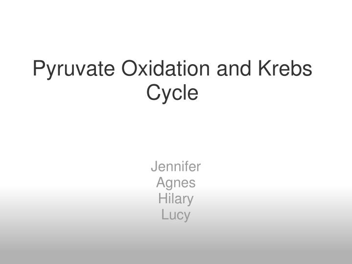 PPT - Pyruvate Oxidation and Krebs Cycle PowerPoint Presentation