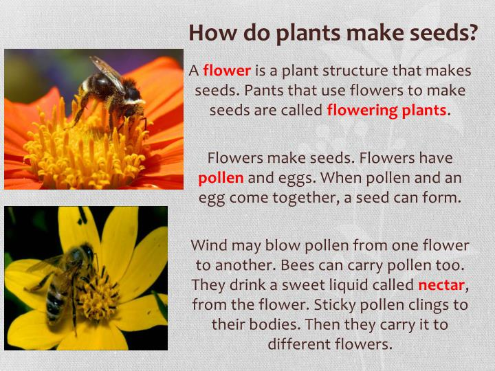 PPT - Plant life cycles PowerPoint Presentation - ID5335610