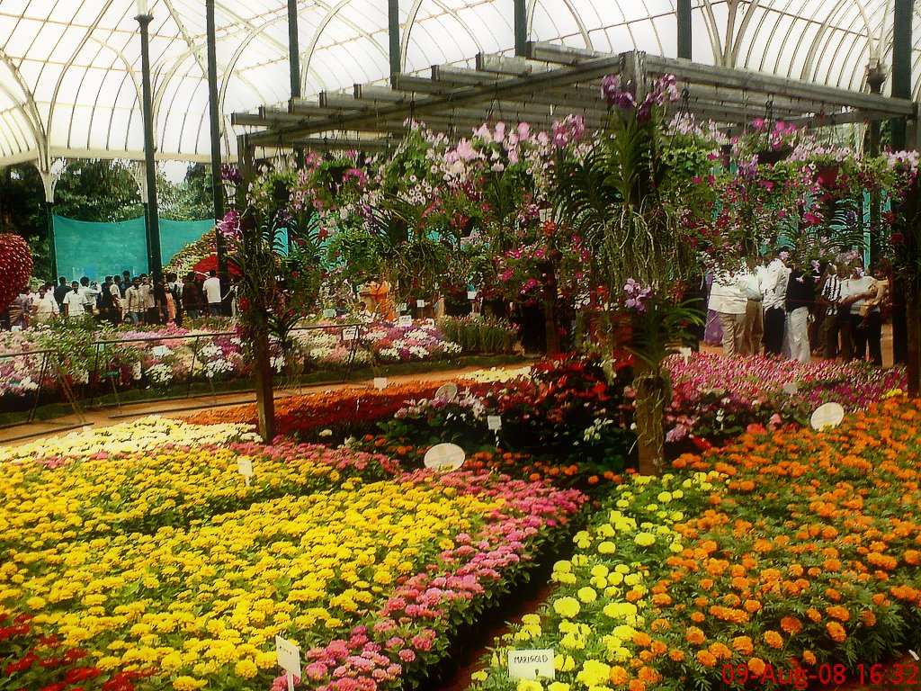 Ooty Hd Wallpapers Lalbagh Botanical Garden Bengaluru Reviews Lalbagh