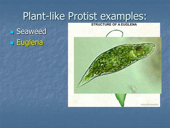 Plant Organism Examples