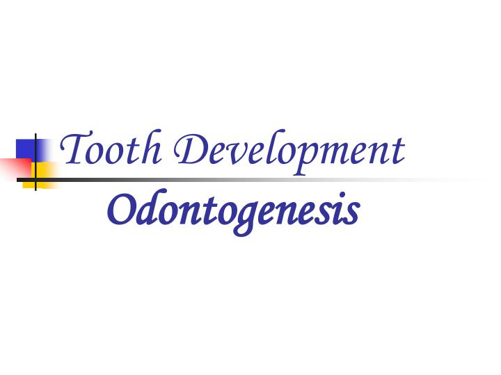 PPT - Tooth Development Odontogenesis PowerPoint Presentation - ID