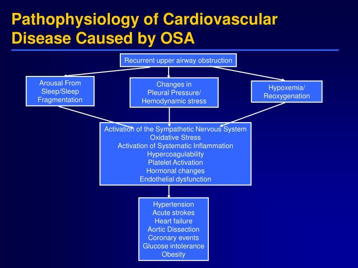 human cardiovascular physiology