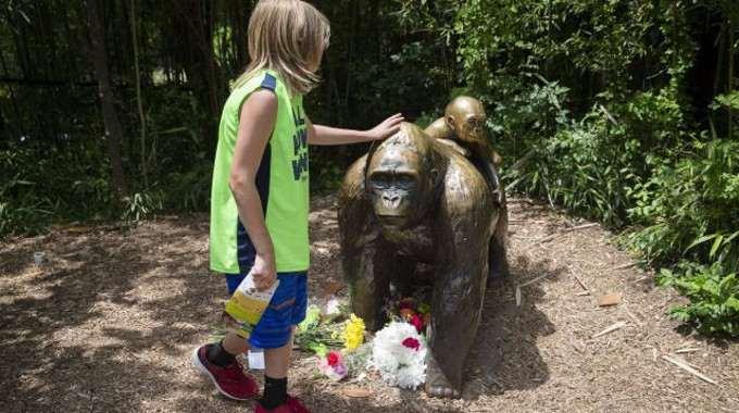 hero-gorilla-compressed