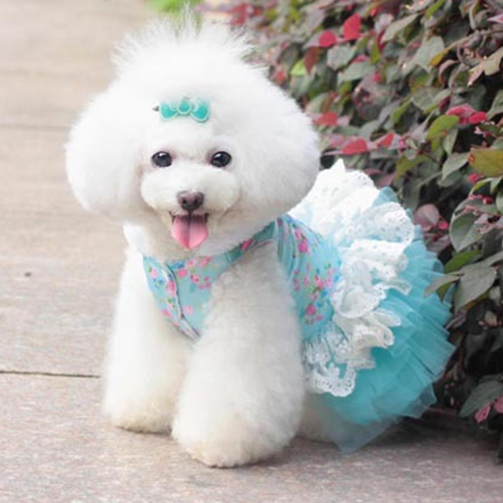 Imagenes de perros vestidos muy chidas para el facebook for Fondos de pantalla de perritos