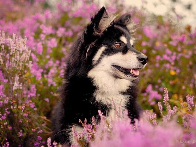 Fotos de perros en un jardin de flores para el celu for Ahuyentar perros del jardin