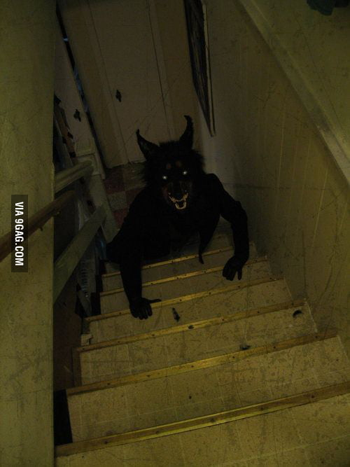 Black Wolf Wallpaper What Would You Do When You See This Coming Up Your Stairs