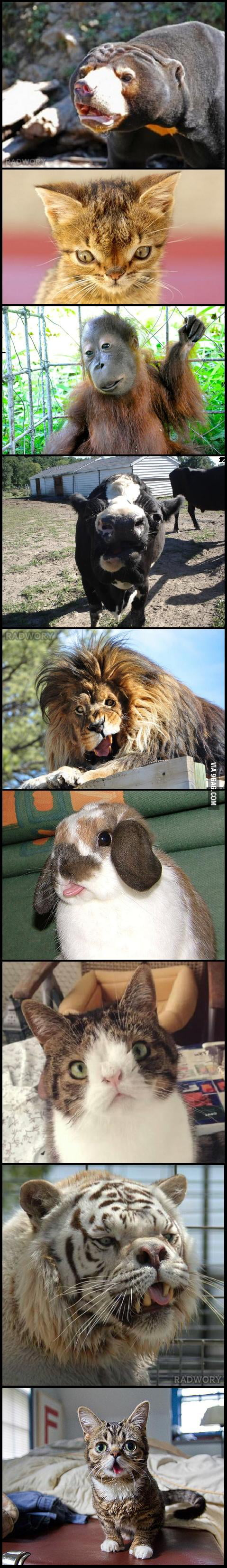 Medium Of Animals With Down Syndrome