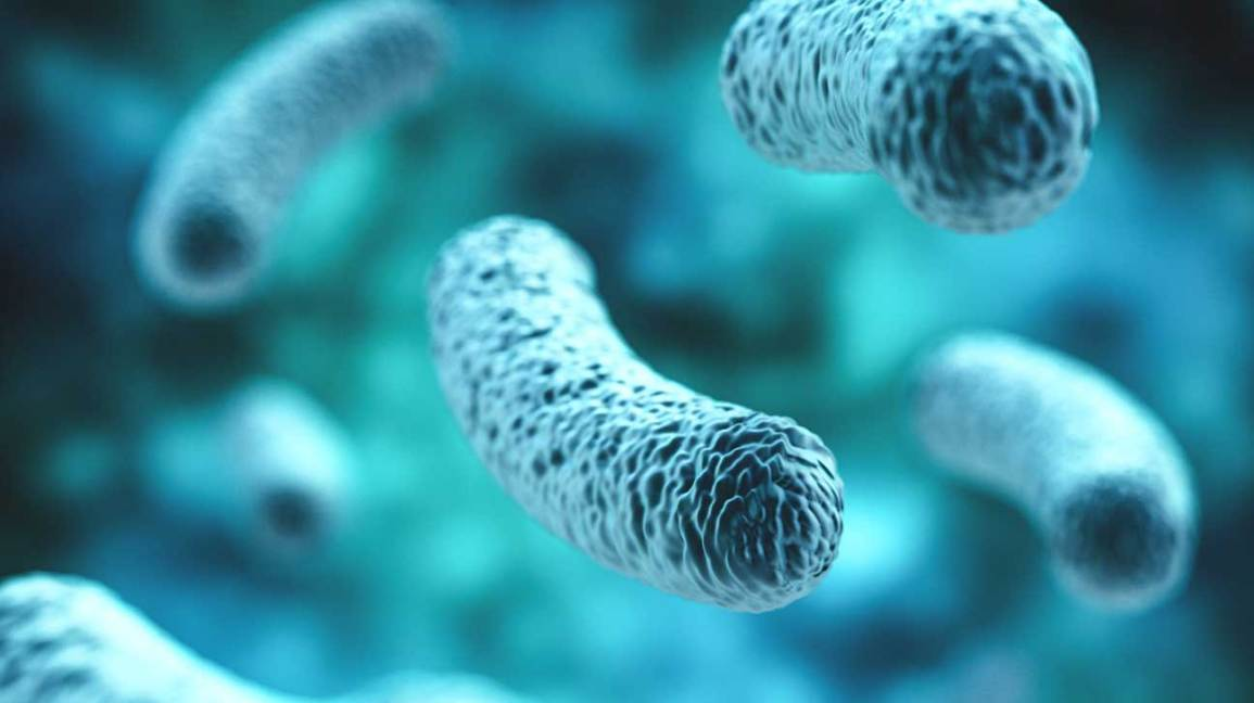 Scientists Focus on Gut Flora for Future Treatments of Autoimmune Diseases