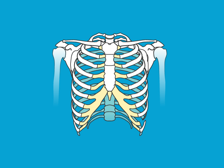 Skeletal System Anatomy and Function, Diagram, Diseases, and More