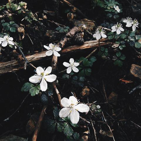 Sad Boy Quotes Hd Wallpaper 8tracks Radio Dark Spring Aesthetic 8 Songs Free And