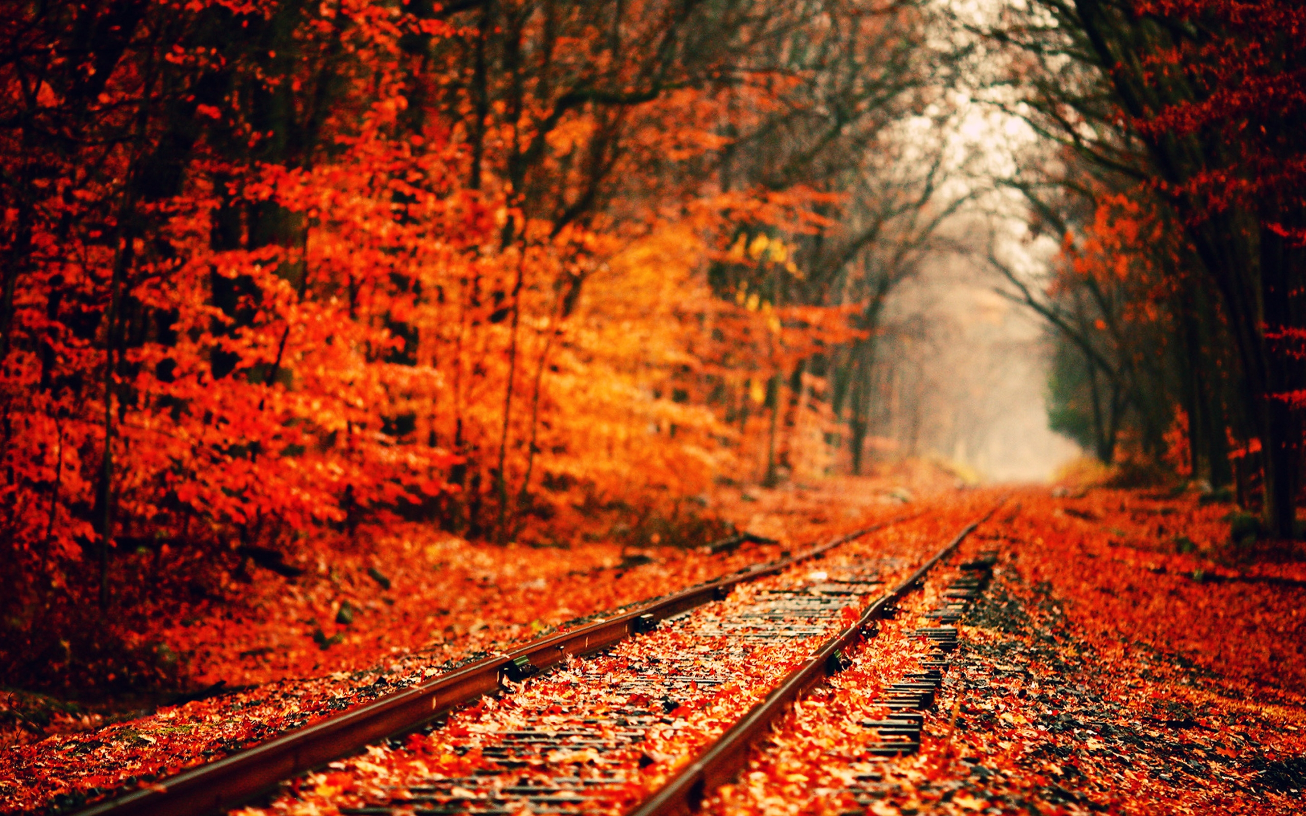 Fall Leaves Desktop Wallpaper 8tracks Radio That Fall Aesthetic 11 Songs Free And