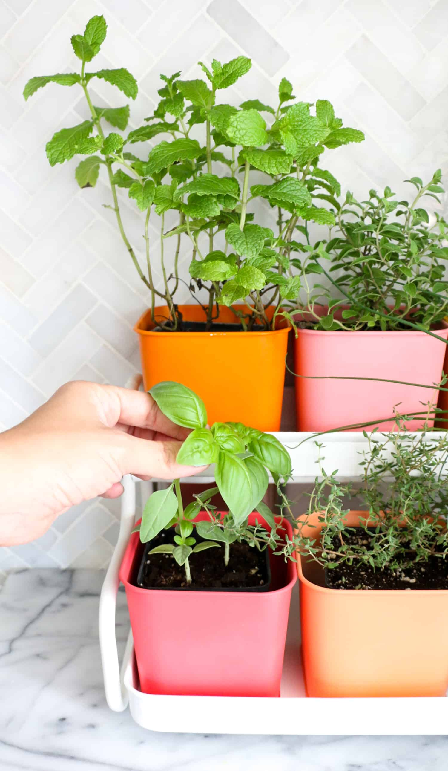 Best Pots For Indoor Herbs Make A Colorful Indoor Herb Garden A Beautiful Mess