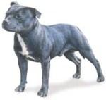 Dog Breeds Detailed Dog Breed Information Pictures