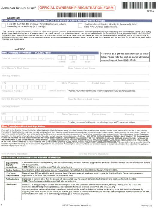 blank job application