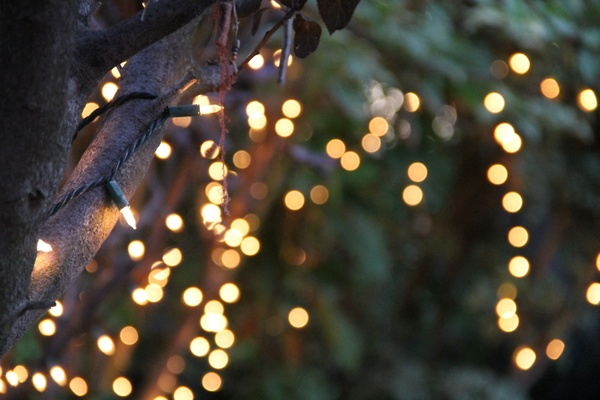 Fall Tree And Black Fence Wallpaper Bokeh Of String Lights On Tree Free Stock Photos In Jpg