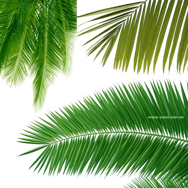 Fire And Water Hd Wallpapers Coconut Leaf Free Stock Photos Download 2 071 Free Stock