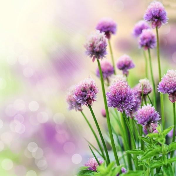 Download Beau Ul Flowers