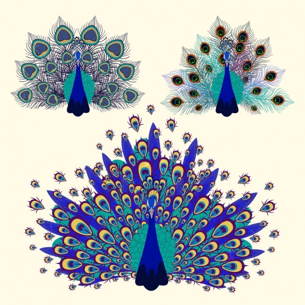 Beautiful Butterfly Girl Wallpaper Peacock Free Vector Download 125 Free Vector For