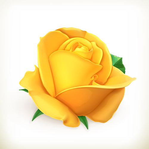 Beautiful Cartoon Girl Wallpaper Yellow Rose Vector Free Vector In Encapsulated Postscript