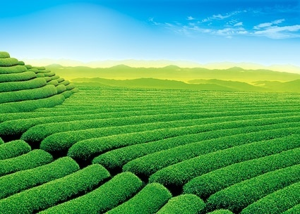 Green field hd free stock photos download (9,980 Free stock photos