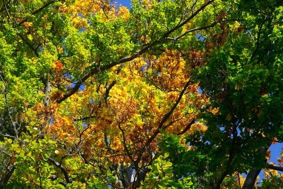 Colorful nature free stock photos download (23,280 Free stock photos