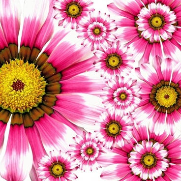 Flower images free stock photos download (10,850 Free stock photos
