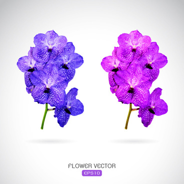 Purple flower vectors free vector download (11,396 Free vector) for