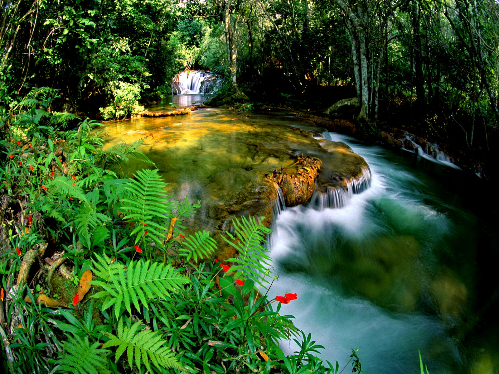 Free Animated Desktop Wallpaper Like Snow Falling On Background Jungle Falls Wallpaper And Background Image 1600x1200