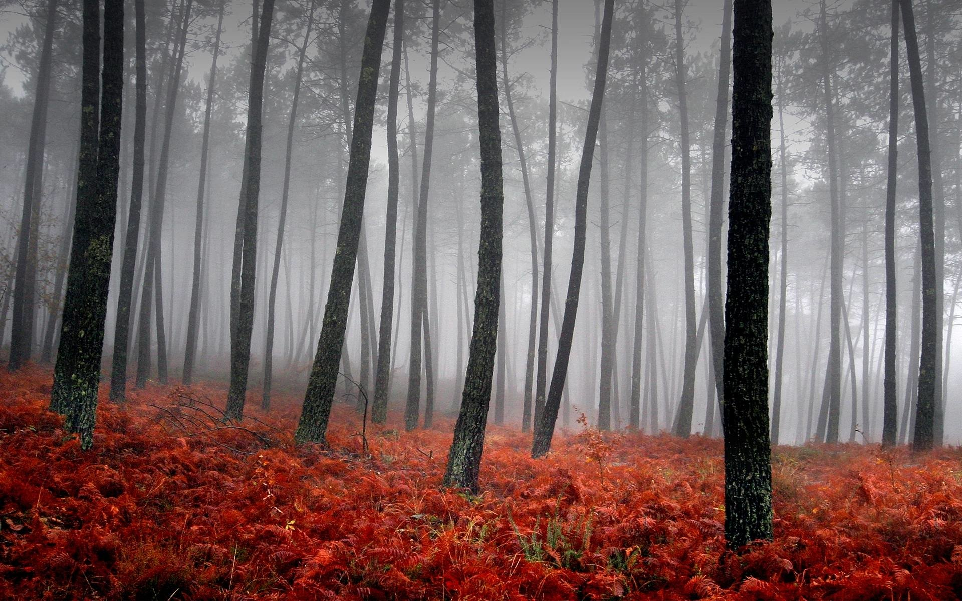Fall Iphone Wallpaper Pinterest Forest Full Hd Wallpaper And Background Image 1920x1200