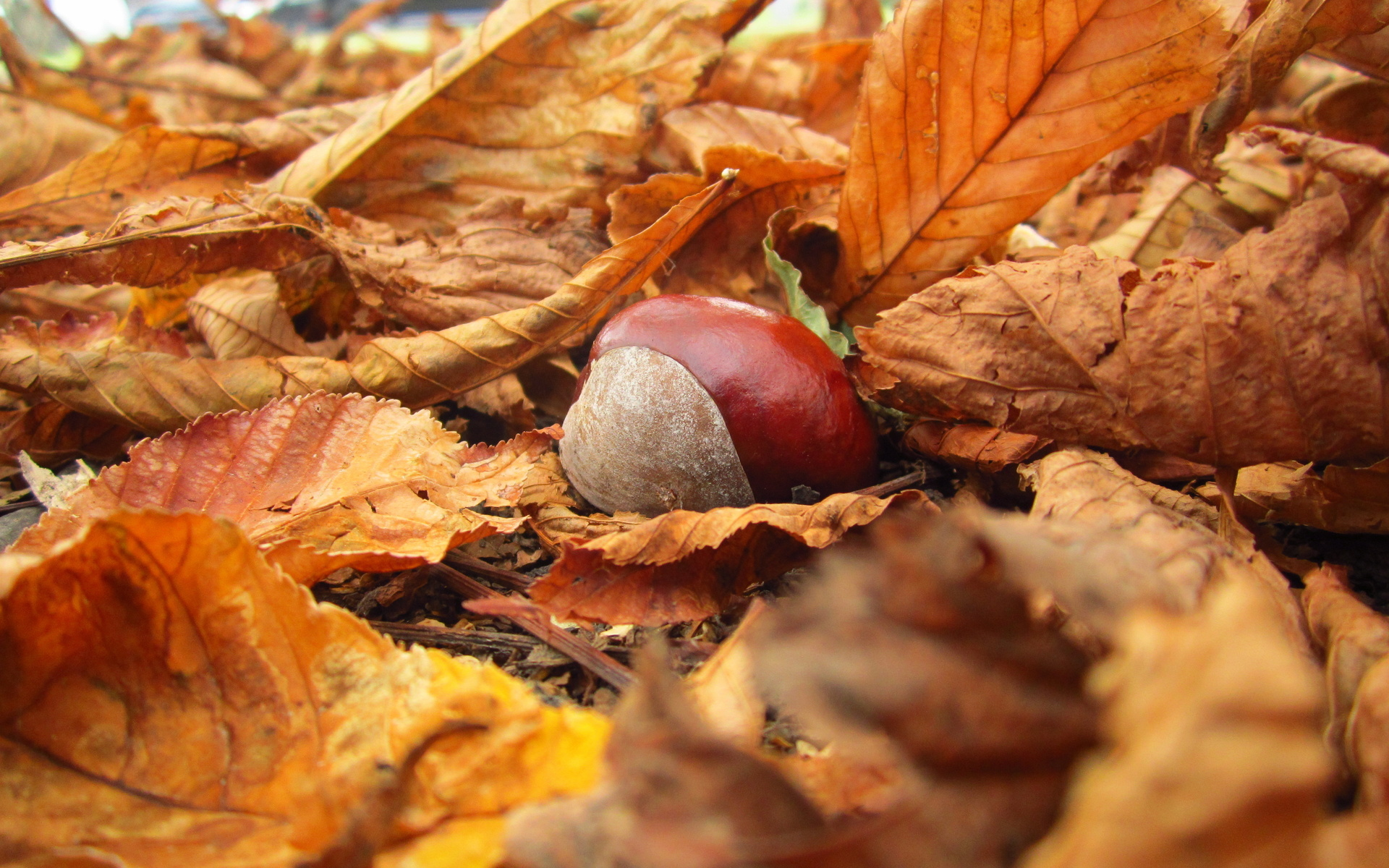 Falling Leaves Wallpaper For Iphone Fall Full Hd Wallpaper And Background Image 1920x1200