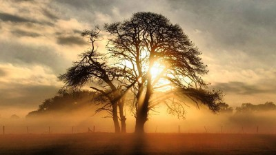 Misty Sunrise Behind The Tree HD Wallpaper | Background Image | 1920x1080 | ID:498413 ...