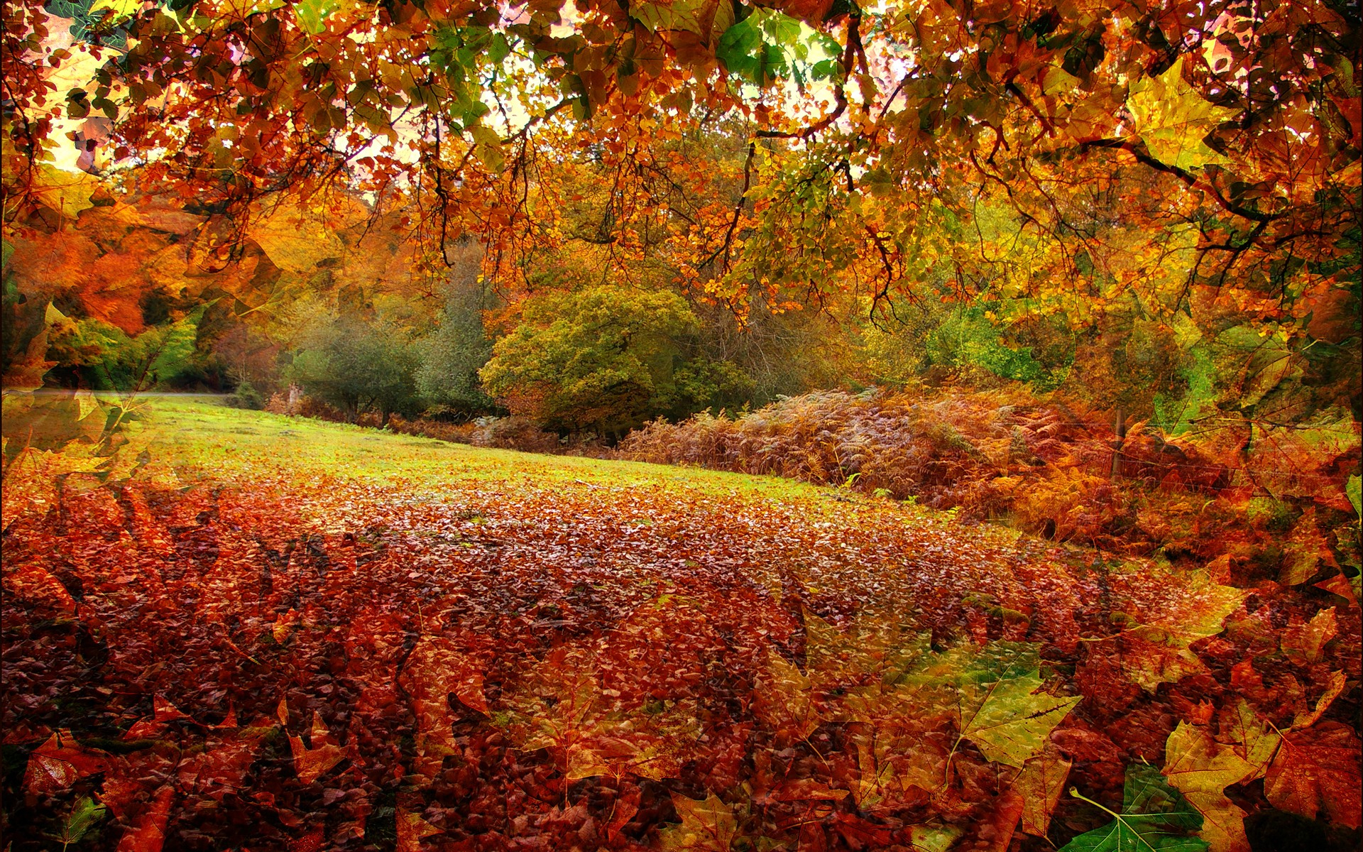 Iphone Wallpaper Fall Leaves Fall Hd Wallpaper Background Image 1920x1200 Id