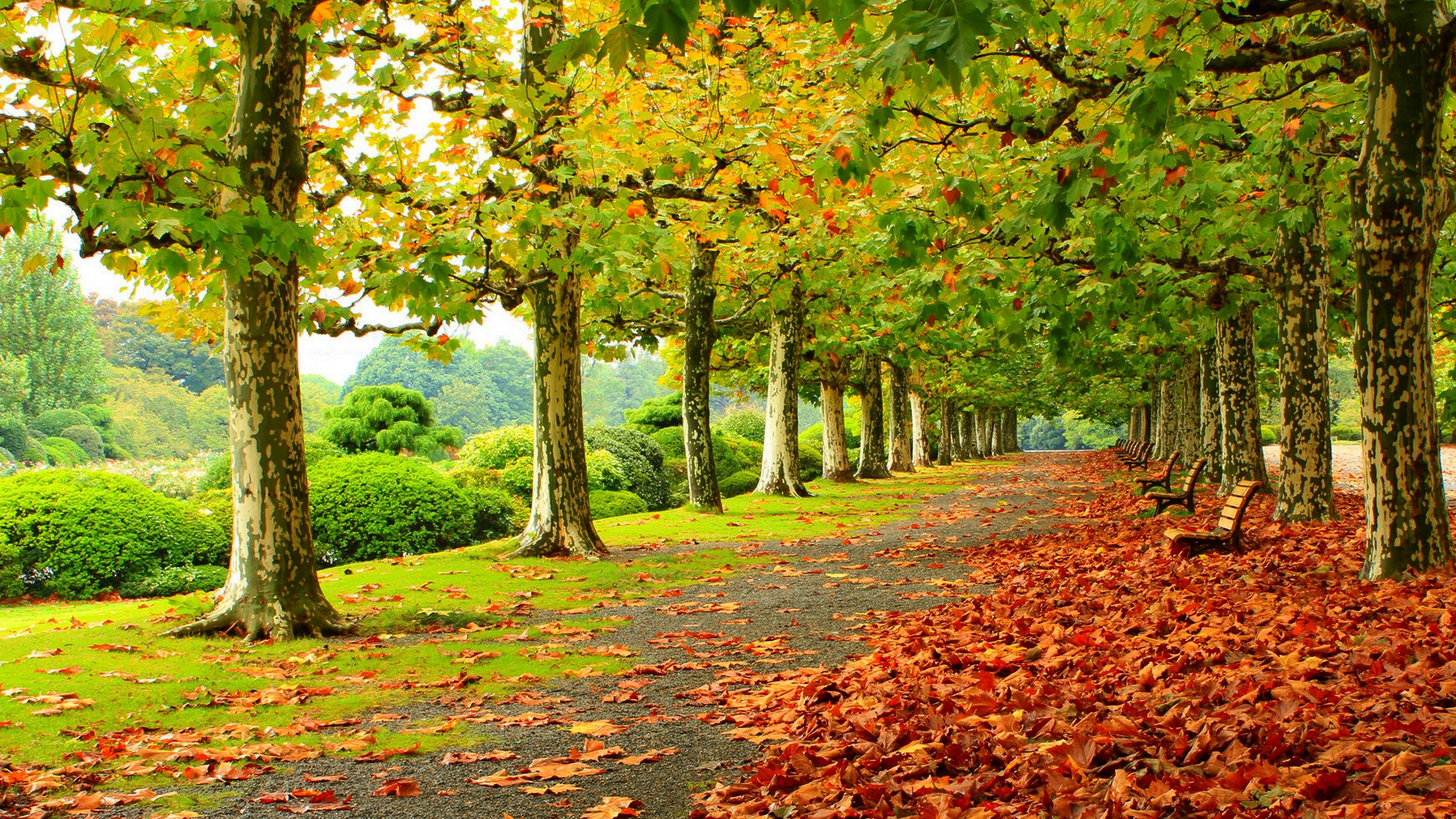 Iphone 6 Wallpaper Fall 照片 Park 4k Fall Leaf Bench Alley 桌布
