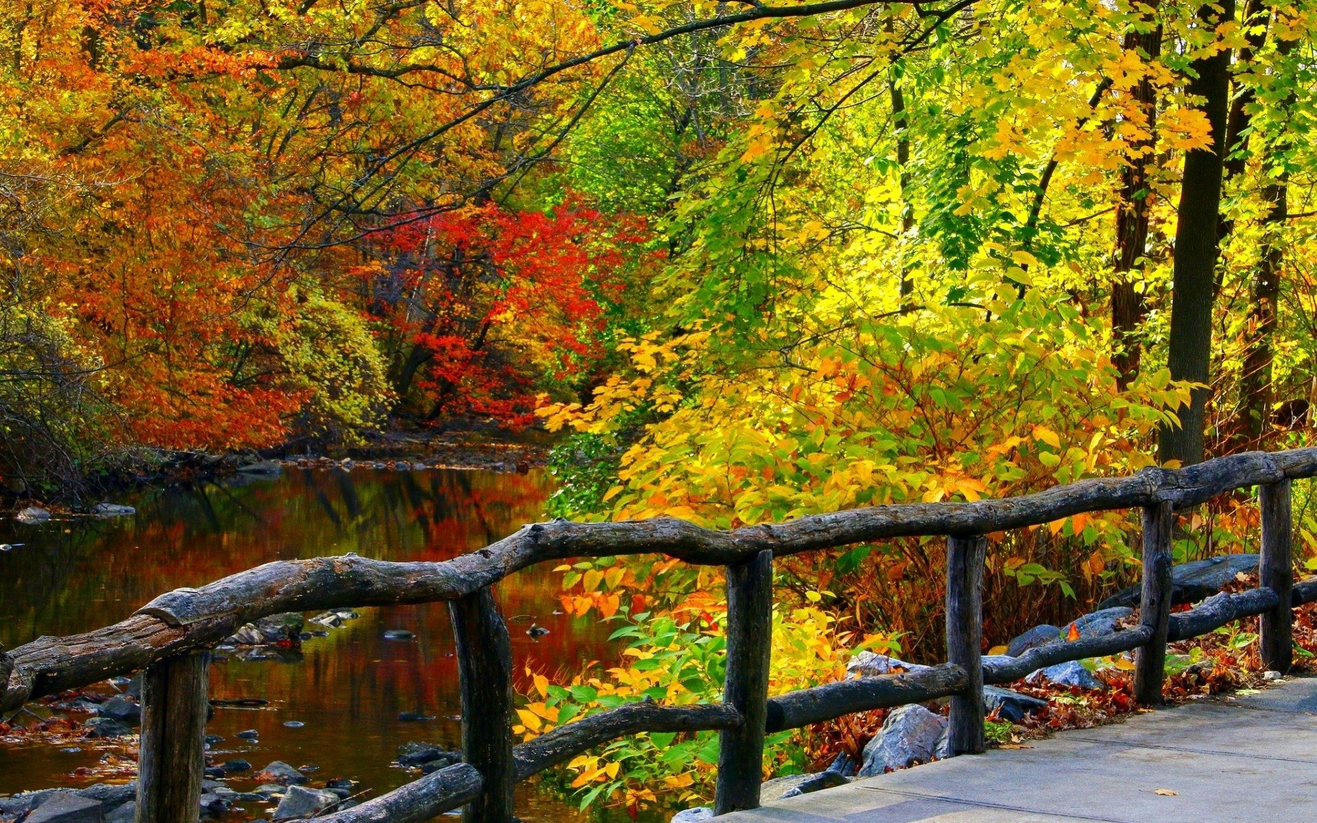 Fall Foliage Iphone Wallpaper Fence In Autumn Forest Hd Wallpaper Background Image