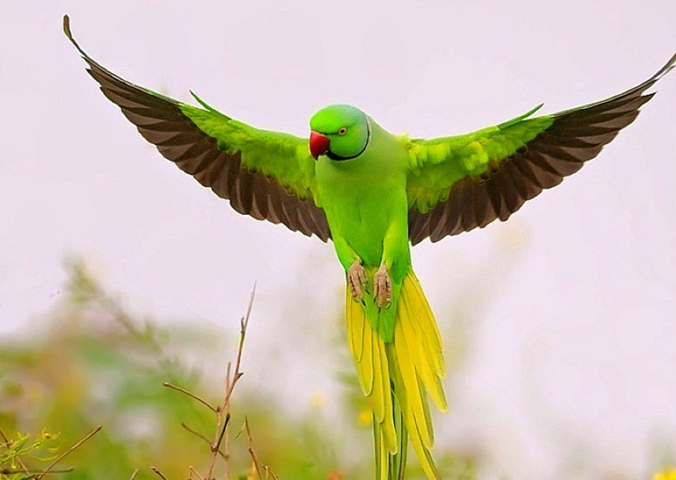 Download Printable Parrot Pictures on Animal Picture Society