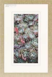 Cactus Transitional Botanical Framed Wall Art (Set of 3 ...