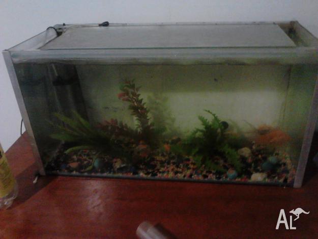 10ft fish tanks for sale giant aquariums large acrylic for Large fish tanks for sale
