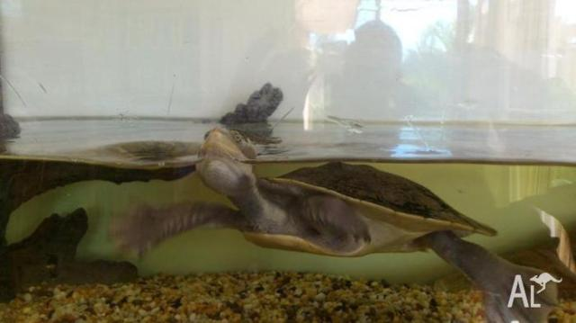 Turtle   tank   stand   UV light, pump and heater in ADVANCETOWN