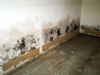 Drywall Damage: Wet Drywall & Mold   Fixing Water & Mold ...