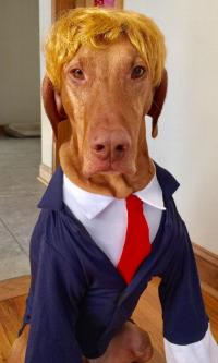 Business Suit Dog Costume - Navy | BaxterBoo