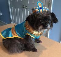 Cleopatra Dog Costume - Blue | BaxterBoo
