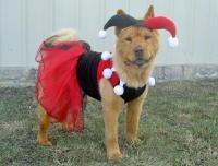 DC Comics Harley Quinn Dog Costume | BaxterBoo
