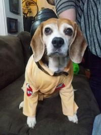 Ghostbusters Dog Costume with Same Day Shipping | BaxterBoo