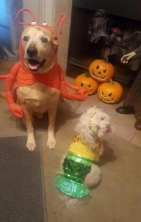 Lobster Dog Halloween Costume by Casual Canin...