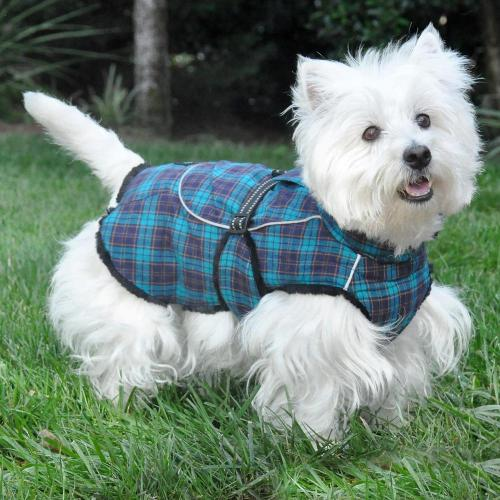 Medium Of Dog Coat Pattern