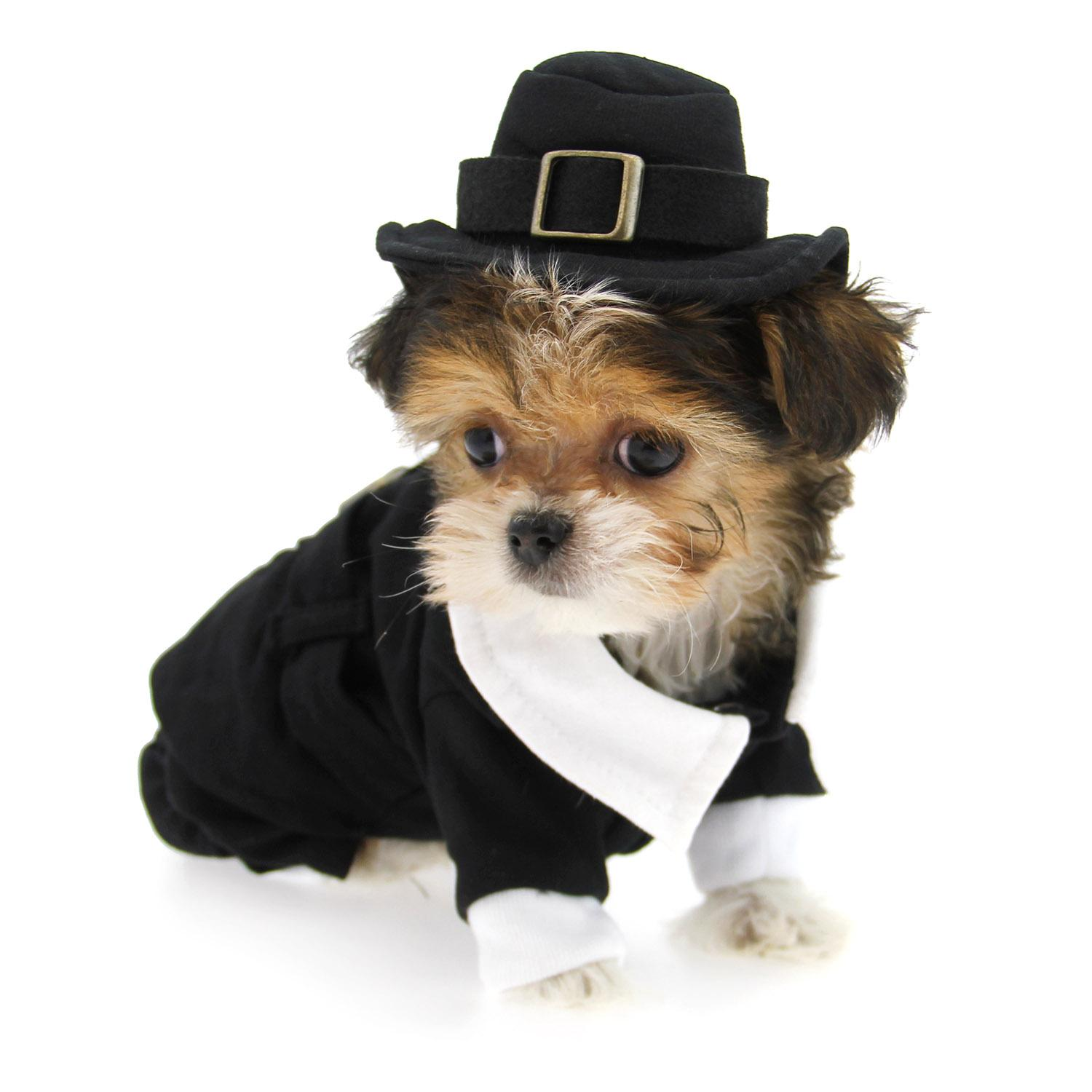 Pilgrim Boy Dog Costume with Same Day Shipping